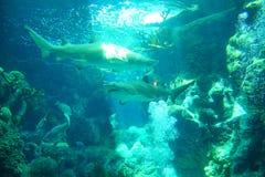 Ein Haifisch schwimmt lizenzfreies stockbild