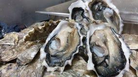 Ein halbes Dutzend Austern Stockbild