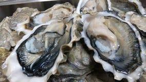 Ein halbes Dutzend Austern Stockfotos