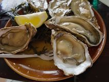 Ein halbes Dutzend Austern mit Zitrone Lizenzfreies Stockfoto