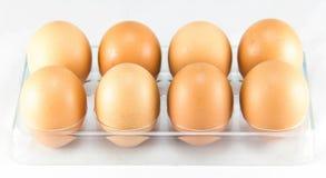 Ein halbes Dutzend Eier in der Eierablage Lizenzfreie Stockfotografie