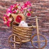 Ein Hamster stockfotos