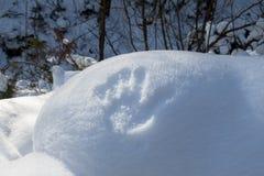Ein Handdruck im Schnee im Wald Lizenzfreies Stockfoto