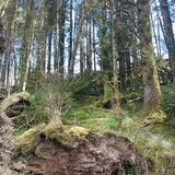 Ein heimlicher Blick an der irischen Natur stockfotos
