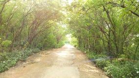 Ein Heimweg mit gebogenen Bäumen stockbild