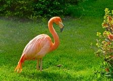 Ein hell farbiger Flamingo Stockfoto