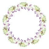 Ein heller Kranz von Niederlassungen von purpurroten Blumen und von grünen Blättern, Aquarellillustration stock abbildung
