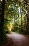 Ein heller Weg im bayerischen Holz stockbild