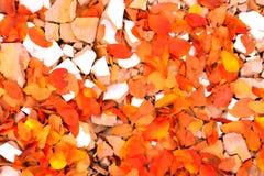 Ein Herbst kommt Lizenzfreies Stockfoto
