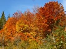 Ein Herbst zeichnet ein Hochrot Lizenzfreie Stockfotos