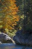 Ein Herbsttag morgens Bergbach Lizenzfreies Stockbild