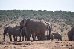 Ein herde von Elefanten an einem waterhole Trinkwasser an einem sonnigen Tag in Addo Elephant Park in Colchester, Südafrika Lizenzfreies Stockfoto