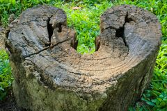 Ein Herz-förmiger Verrottungsbaumstumpf, gefunden in einem grasartig-grünen Garten stockfoto