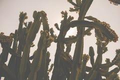 Ein Hintergrund des Kaktus stockfoto