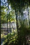 Ein Hintergrund mit Bambusstämmen und Blättern Stockfotos