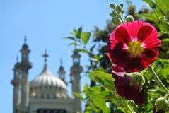 Ein Hintergrund mit rosa Malvenblume und unscharfem königlichem Brighton-Pavillon am Sommertag, Ost-Sussex, England Stockfotografie