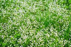 Ein Hintergrund voll von weißen Blumen stockfotos