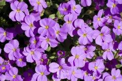 Ein Hintergrund von den Blumen Stockfotografie