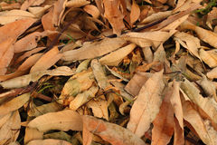 Ein Hintergrund von sterben braune Blätter Stockbilder