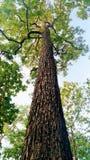 Ein hoher Baum stockfotografie