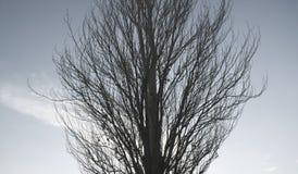 ein hoher Baum im Herbst Stockfoto