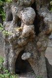 Ein hohler Baum Lizenzfreie Stockfotografie