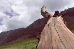 Ein Holz Stockfotografie