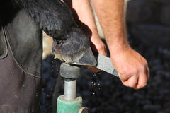 Ein Hufschmied, der einen Pferdehuf trimmt Stockbild
