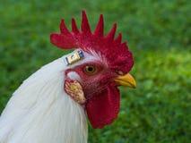 Ein Huhn mit einem Chip lizenzfreie stockfotografie