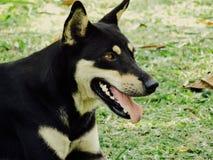 Ein Hund stockfoto