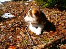 Ein Hund Lizenzfreies Stockfoto