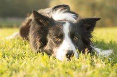 Ein Hund Stockfotografie
