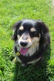 Ein Hund auf dem Gras Stockfotos