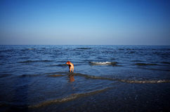 Ein Hund auf dem Strand von Weizhou-Insel lizenzfreies stockfoto