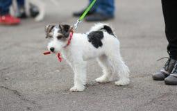 Ein Hund auf einer Leine Lizenzfreie Stockfotos