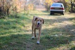 Ein Hund - bemannen Sie ` s besten Freund Lizenzfreies Stockbild