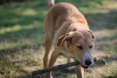 Ein Hund - bemannen Sie ` s besten Freund Lizenzfreies Stockfoto