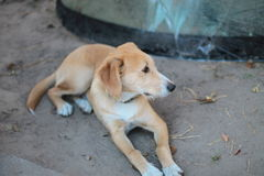 Ein Hund - bemannen Sie ` s besten Freund Lizenzfreie Stockfotografie