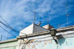 Ein Hund am Dach eines traditionellen weißen andalusischen Hauses in Almeria Stockfotos