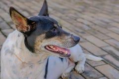 Ein Hund, der auf dem Boden im Spielplatz sich entspannt Stockbild