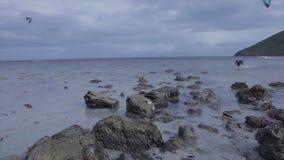 Ein Hund, der auf dem Strand läuft stock video footage