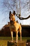 Ein Hund, der auf einem Stein steht Stockbilder