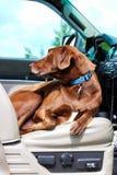 Ein Hund, der bequem im vorderen Sitz eines LKWs sitzt stockfotos