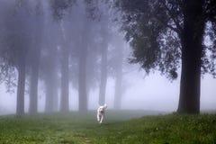 Ein Hund, der durch den Nebel läuft Stockbild