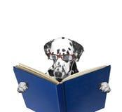 Ein Hund, der ein Buch liest Lizenzfreie Stockfotos