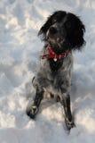 Ein Hund, der in einem Schnee spielt Lizenzfreie Stockbilder