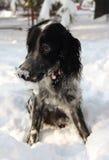 Ein Hund, der in einem Schnee spielt Lizenzfreie Stockfotos