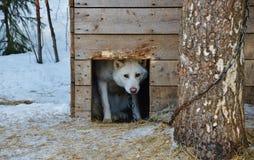 Ein Hund in der Hundehütte Lizenzfreies Stockfoto