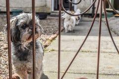 Ein Hund, der sein Eigentümercomebackhaus wartet Stockfotografie