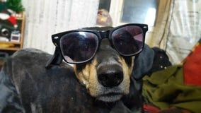 ein Hund in der Sonnenbrille Lizenzfreies Stockbild